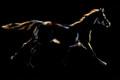 Wend Britton - Cards - Midnight Horse