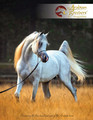 The Arabian Breeders' Magazine - Volume IV Issue II (cover 1)