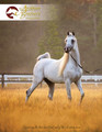 Copy of The Arabian Breeders' Magazine - Volume IV Issue II (cover 2)