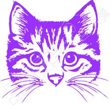 Cat 61