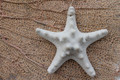 "3"" Sand Bumpy Starfish Ornament OR-150"