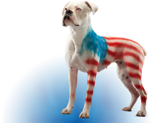 Pet Safe Paint | Pet Costumes for Dogs | Pet Spray Paint - Pet Paint