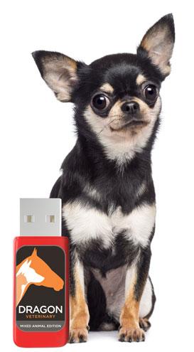 Tiny dog who thinks he's huge with Dragon Veterinary USB Stick!