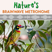 Natures Brainwave Metronome MP3