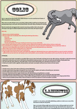 This is a sample of a small section of the poster. Many other potential problems are covered in the full sized poster.