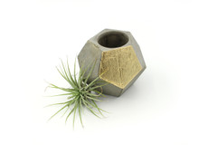Maple + Mauve - Concrete Planter - Gold
