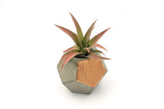 Maple + Mauve - Concrete Planter - Copper
