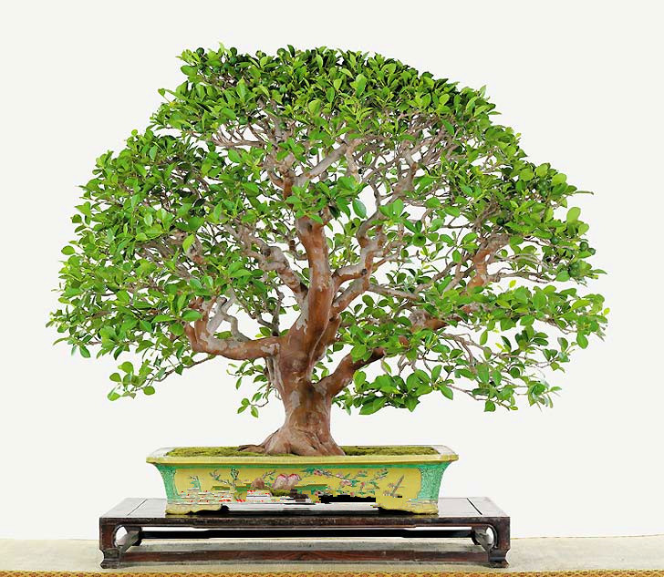 The Five Best Times To Give The Gift Of Bonsai Bonsai Outlet