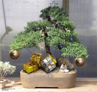 5 reasons a bonsai tree is the perfect christmas gift