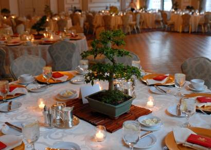 Four Ways Bonsai Trees Are Great For Weddings Bonsai Outlet