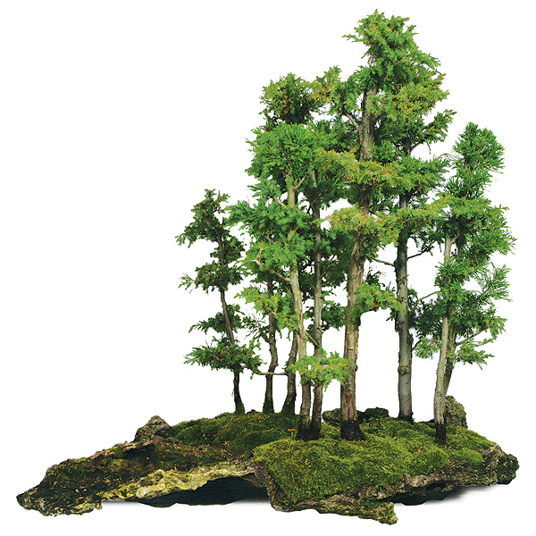 foemina-juniper-bonsai-tree.jpg