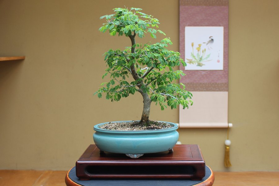 Quality Bonsai Trees & Supplies | 100,000+ Trees Shipped