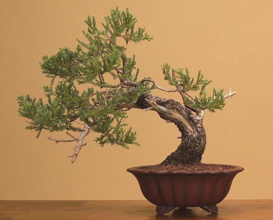 Quality Bonsai Trees & Supplies | 100,000+ Trees Shipped