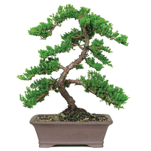 Bonsai Outlet