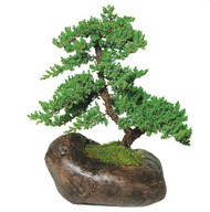 Juniper Rock Pot (Outdoor)