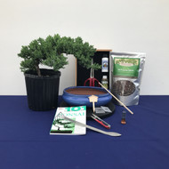 Create Your Own Bonsai Kit - Windswept Juniper (Large)