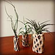 3 Piece Air Plant Kit