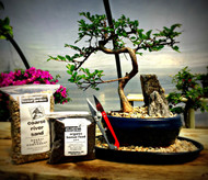 Chinese Elm Kit w/Rocks from N.E.B.G