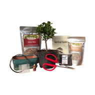 Bonsai DIY Kit - Green Island Ficus