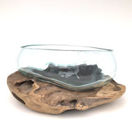 Large Hand blown Molten Glass Terrarium & Driftwood (termb)