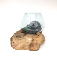 Medium Hand blown Molten Glass Terrarium & Driftwood (terse)