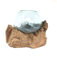 Medium Hand blown Molten Glass Terrarium & Driftwood (tersm)
