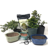 3-pack DIY Pre-Bonsai KIT.