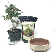 DIY Pre-Bonsai Flowering Fukien Tea KIT (medium)