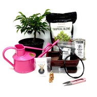 Pink Pre-Bonsai Repotting Kit (Oriental Ficus)