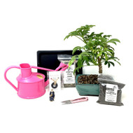 Pink Bonsai Kit (Hawaiian Umbrella)