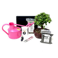 Pink Bonsai Kit (Dwarf Jade)