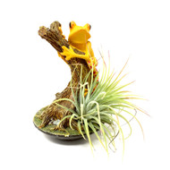 Air Plant With Reptile Base Holder