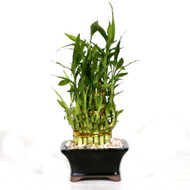 Lucky Bamboo - Three Tier Pyramid (Indoor)