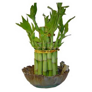 2 Tier Birthday Cake Lucky Bamboo with Frog Vase