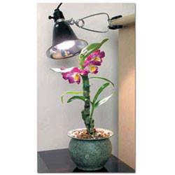 Bonsai Tree Clamp On Grow Light Kit 60 Watts Bonsai Outlet