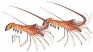 Guy Harvey Lobster Window Decal