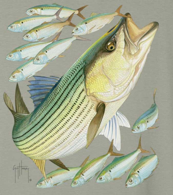 Guy Harvey Stripe Bass Mens