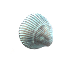 mini-clam-magnet-77635-1405401584-230-230.jpg
