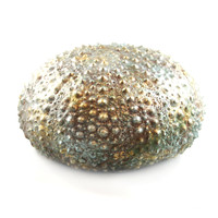 "3400.O - Sea Urchin, Paperweight, Ornament (No Magnet, Non-Hanging), Xlarge (14cm / 5.5"" diameter), Each"
