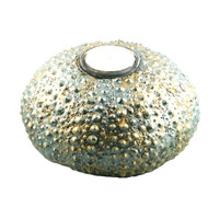 "3400.T - Sea Urchin, ""T"" Light, XLarge (14cm / 5.5"" diameter), Each"