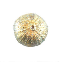 "3100.H - Sea Urchin, Hanging, Small (5cm / 2""), Each"