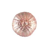 """3000.M - Sea Urchin, Magnet, Mini (3cm / 1.18""""), Each"""
