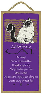 ADVICE FROM CAT