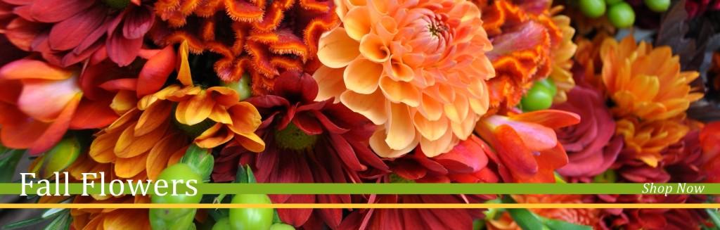 banner-1024x327.jpg