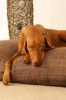 brown-tweed-lounger-bed.jpg