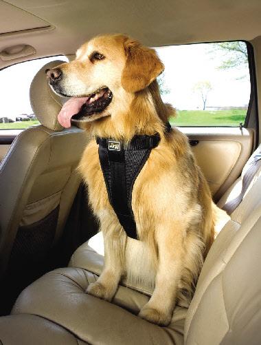 dog-car-harness.jpg