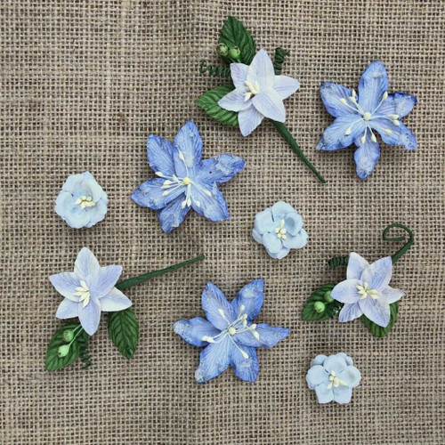 49 and Market - Flowers - Stargazers – Periwinkle