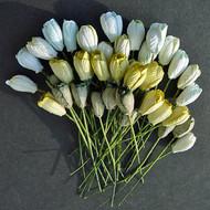Tulip - Mixed Green Tone