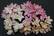 Lily - Mixed Pink