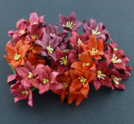 Lily - Mixed Red